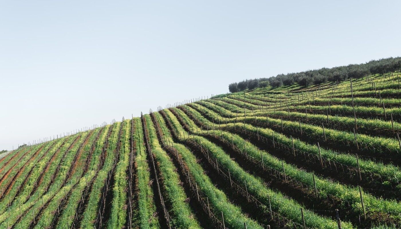 THE FUTURE OF THE SOUTH AFRICAN WINE INDUSTRY