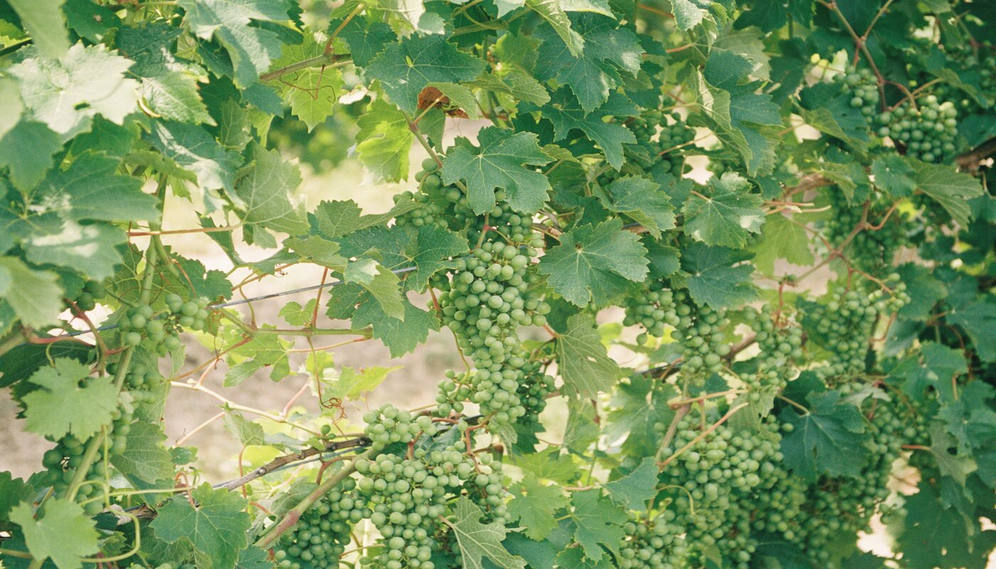 INTERNATIONAL SAUVIGNON BLANC DAY: BEST SELLING SAUVIGNON BLANC FROM SOUTH AFRICA